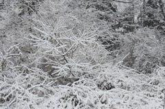 Snöig buskar arkivfoto