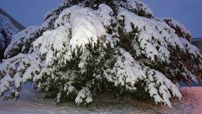 Snöig buske royaltyfria bilder