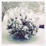 Snöig buske Royaltyfri Bild