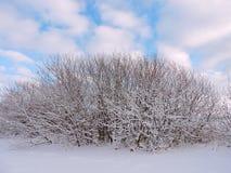 Snöig buske i vinter arkivfoto
