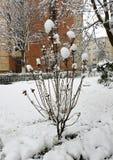Snöig buske med snöblommor royaltyfri foto