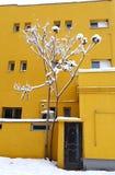 Snöig buske med snöblommor och gula byggnader royaltyfri fotografi