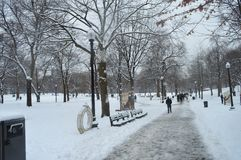 Snöig Central Park FN Boston, USA på December 11, 2016 Royaltyfri Bild