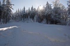 Snöig dag för vinter i Moravskoslezske Beskydy Royaltyfri Bild