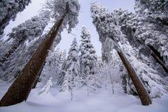Snöig dag i den svarta skogen Fotografering för Bildbyråer