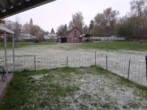 Snöig dag som har uppsikt över den stora röda ladugården arkivfoton