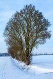 Snöig fält Royaltyfria Foton
