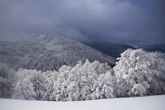 Snöig fält, träd, vinter i Vosgesna, Frankrike Arkivfoto