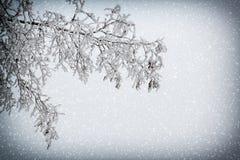 Snöig förgrena sig med karaktärsteckning och snowfall royaltyfri bild