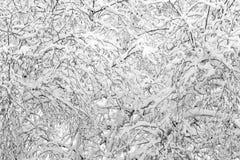 Snöig filialer Arkivfoto