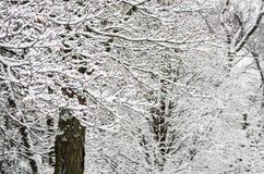 Snöig filialer Royaltyfri Foto