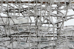 Snöig filialer Royaltyfria Foton