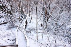 Snöig Forest Scenery Illinois Arkivfoto