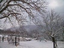 Snöig Forest In The Winter Covered vid vit snö Royaltyfri Bild