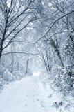 Snöig form Arkivbild