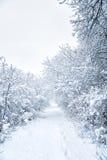 Snöig form Arkivfoton