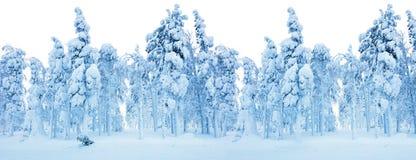 Snöig fryst skog - vintergränsbakgrund royaltyfria foton