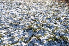 Snöig gräs Fotografering för Bildbyråer