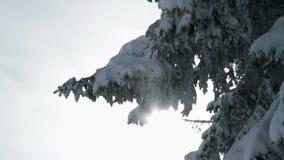 Snöig gran lager videofilmer