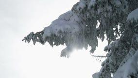 Snöig gran arkivfilmer