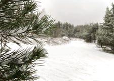 Snöig gran Arkivbilder