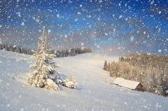 Snöig gran i bergen royaltyfri fotografi