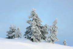 Snöig granar i bergen Royaltyfria Bilder