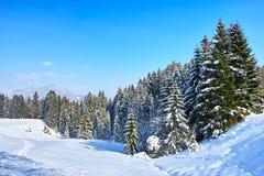 Snöig granskog i alpint landskap på blå himmel Arkivbild