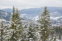 Snöig granträd. Royaltyfri Foto
