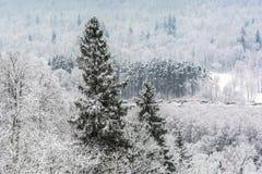 Snöig granträd royaltyfri foto
