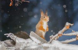 Snöig himmel Arkivfoton