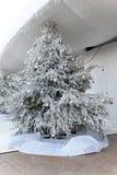 Snöig julgran Royaltyfri Bild