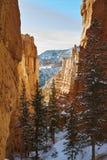 Snöig kanjon arkivbilder
