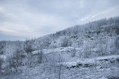 Snöig kulle som täckas med skogen Arkivfoto
