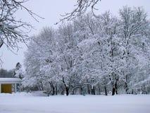 Snöig landcsapesikt för vinter Royaltyfri Fotografi