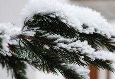 Snöig landskap av Dolomitesberg under vinter Royaltyfria Bilder
