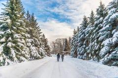 Snöig landskap för vinter i Montreal arkivbilder