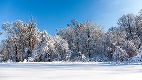 Snöig landskap för vinterskog Härlig snö täckte naturväxter, bakgrund för blå himmel, soligt väder royaltyfria foton
