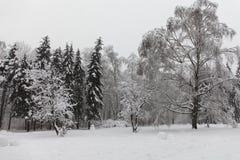 Snöig landskap för vinterskog Härlig snö täckte naturväxter, grå himmelbakgrund arkivbild