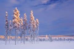 Snöig landskap i finlandssvenska Lapland i vinter på solnedgången Arkivfoto