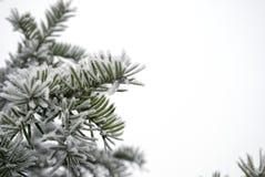 Snöig leafs Royaltyfri Foto
