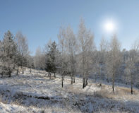 snöig liggande royaltyfri bild