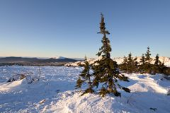 Snöig liggande för vinter. Wild natur i Russia.Taiga royaltyfri fotografi