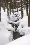 Snöig liten vik Royaltyfria Bilder