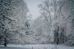 Snöig majestät Arkivfoto