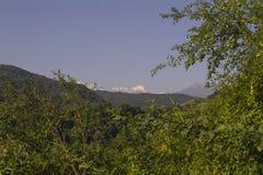 Snöig maxima av Kaukasuset som är synligt mellan gröna träd Arkivbild