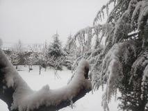 Snöig morgon arkivbilder