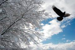 snöig morgon Arkivfoto