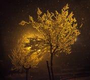 Snöig natt - träd Royaltyfria Bilder