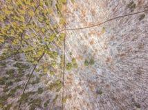Snöig och djupfryst vinterskog Arkivbild
